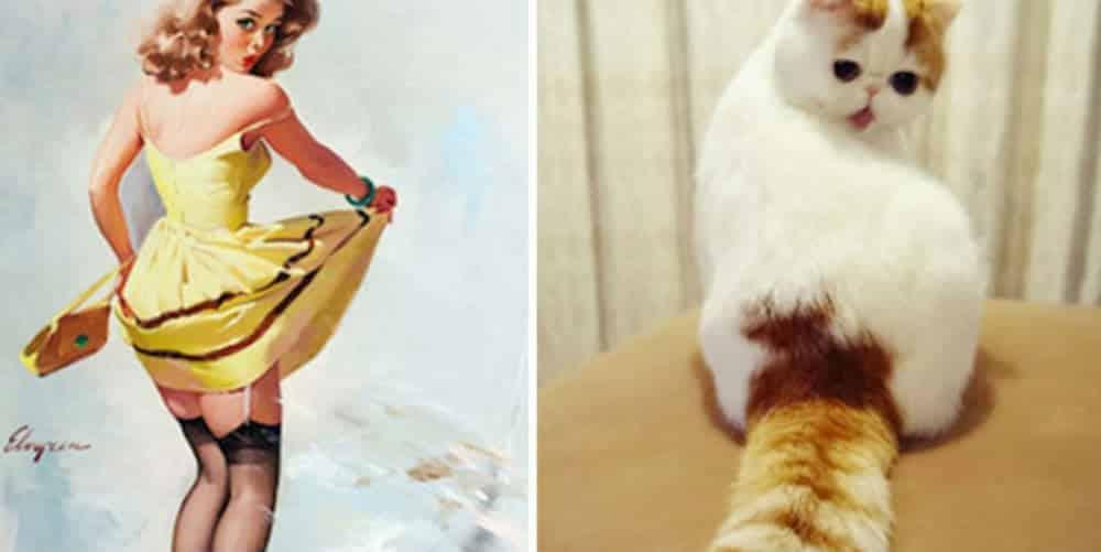 31 gatos que pensam que são pin-ups