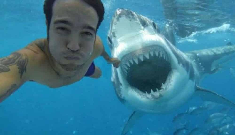 O que mata mais: selfies ou tubarões?