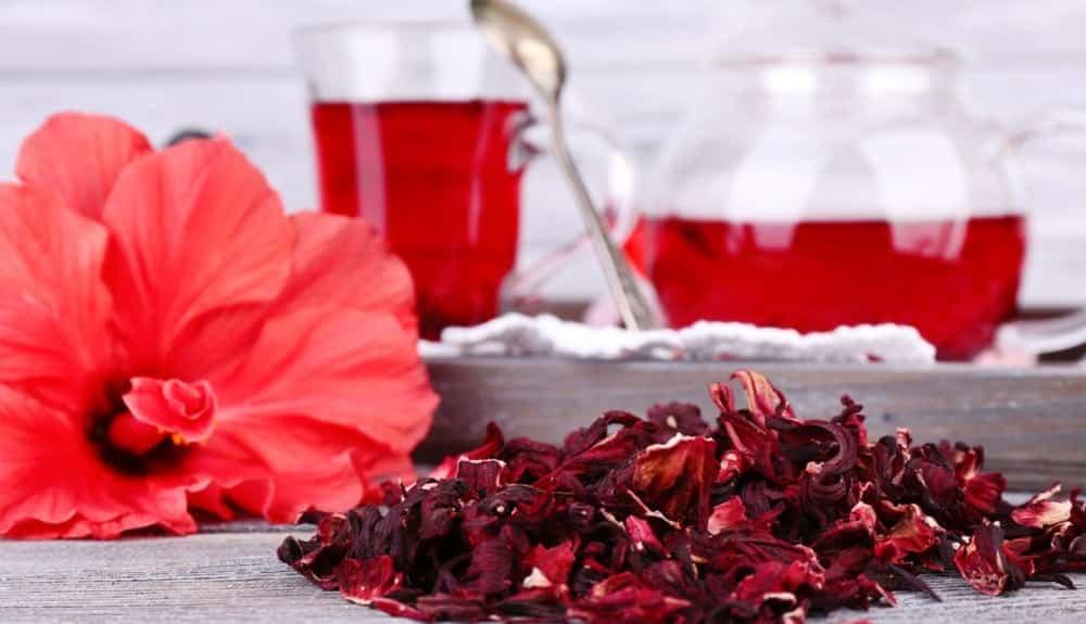 Perigo: Chá de hibisco compromete a fertilidade