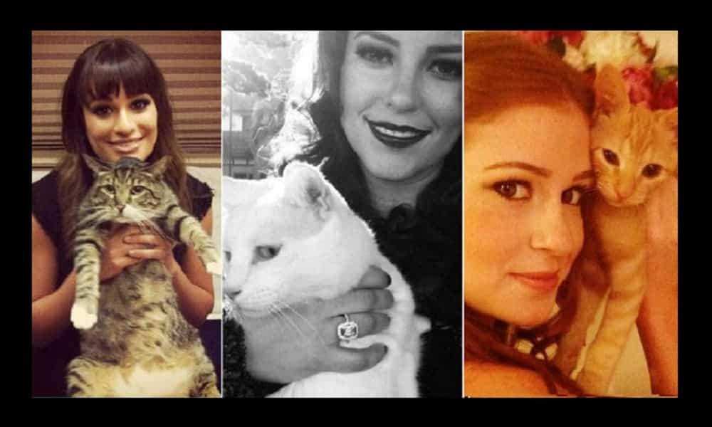 Conheça os gatinhos de estimação das celebridades
