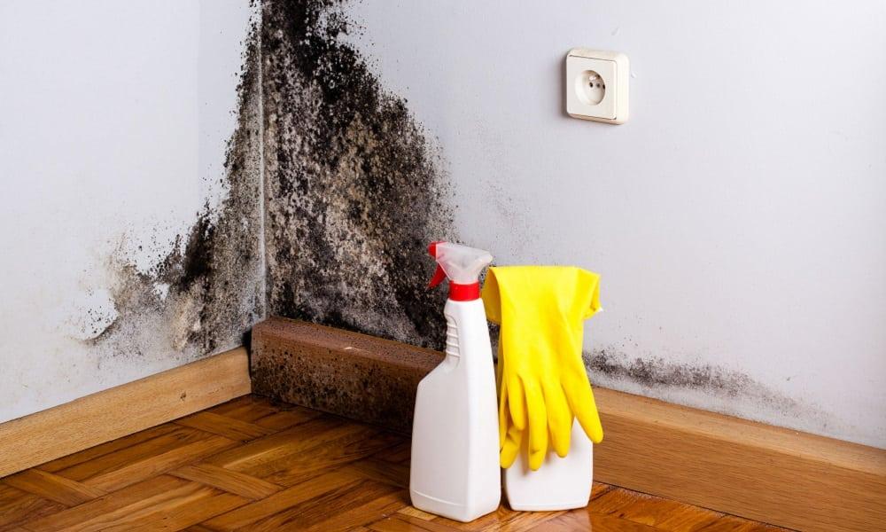 Como acabar com o mofo das paredes com uma solução caseira