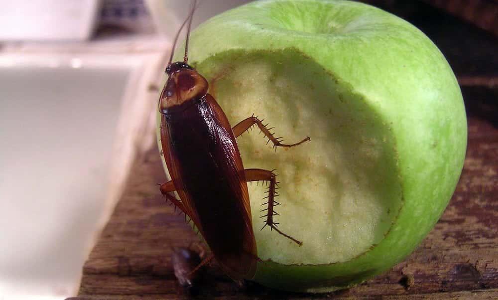 Como acabar com os insetos em casa sem usar veneno