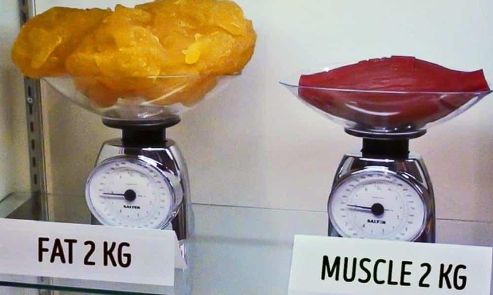 Como saber se ganho de peso depois da musculação é gordura ou músculo