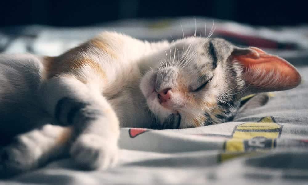 Quer dormir mais rápido? Essas 6 posições vão mudar