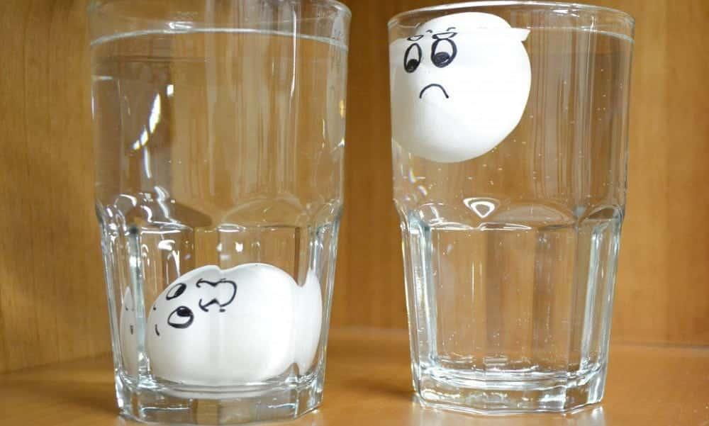Como saber se o ovo está choco antes de quebrá-lo