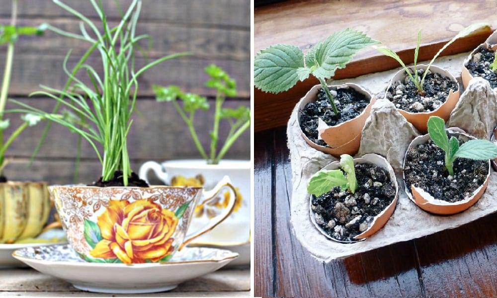 7 ideias práticas para começar uma pequena horta em casa
