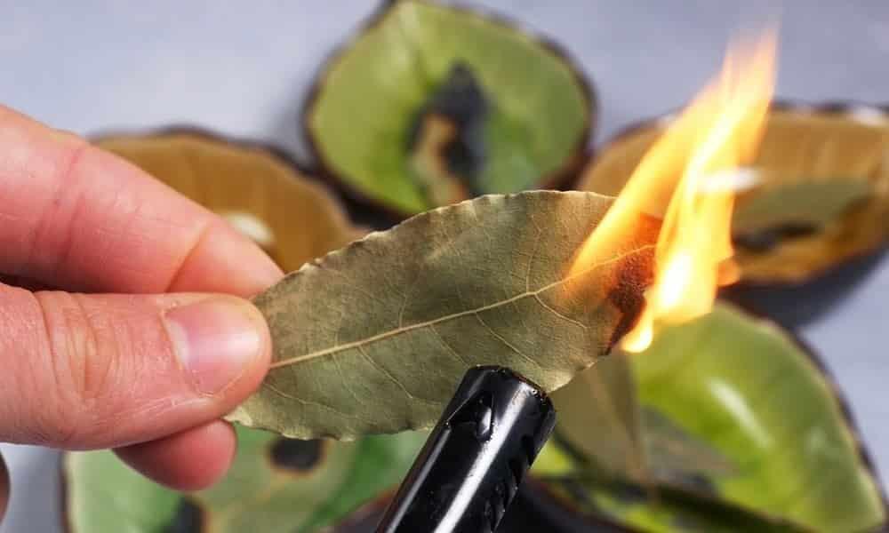 É por isso que você deve queimar folha de louro em sua casa