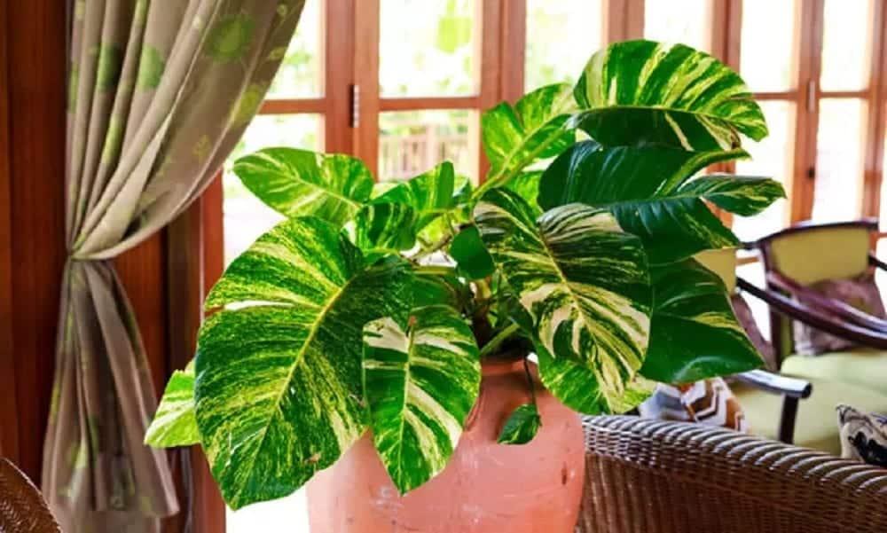 10 plantas que não precisam de muitos cuidados para ter em casa