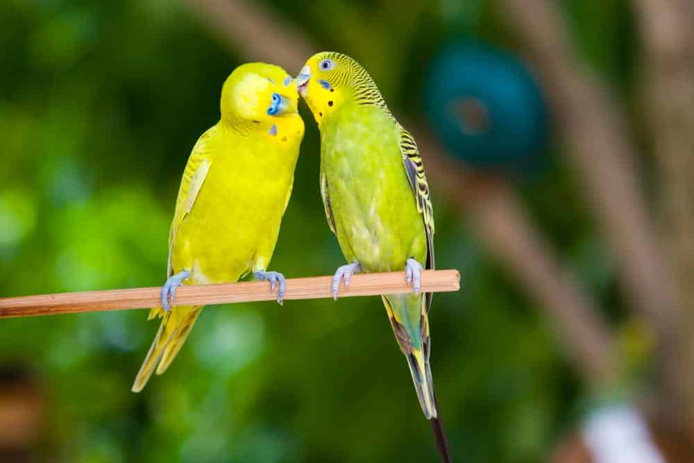 Para ciência relacionamentos duradouros devem ter esses 2 elementos
