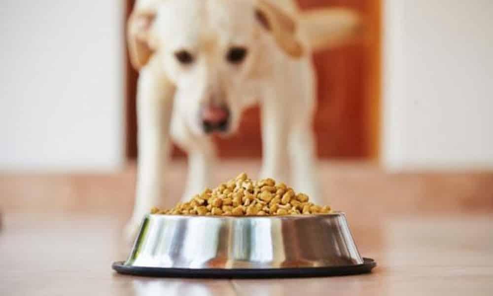 Como cuidar da saúde bucal dos animais domésticos?