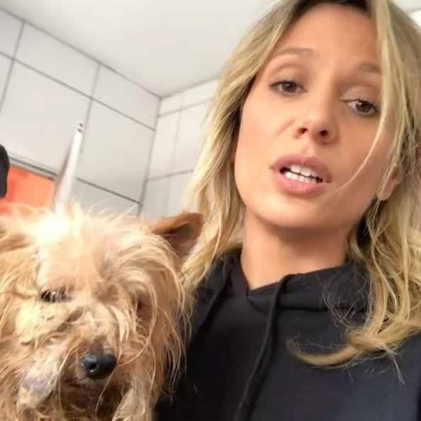 Luisa Mell é ameaçada de morte depois de salvar 1707 cachorros