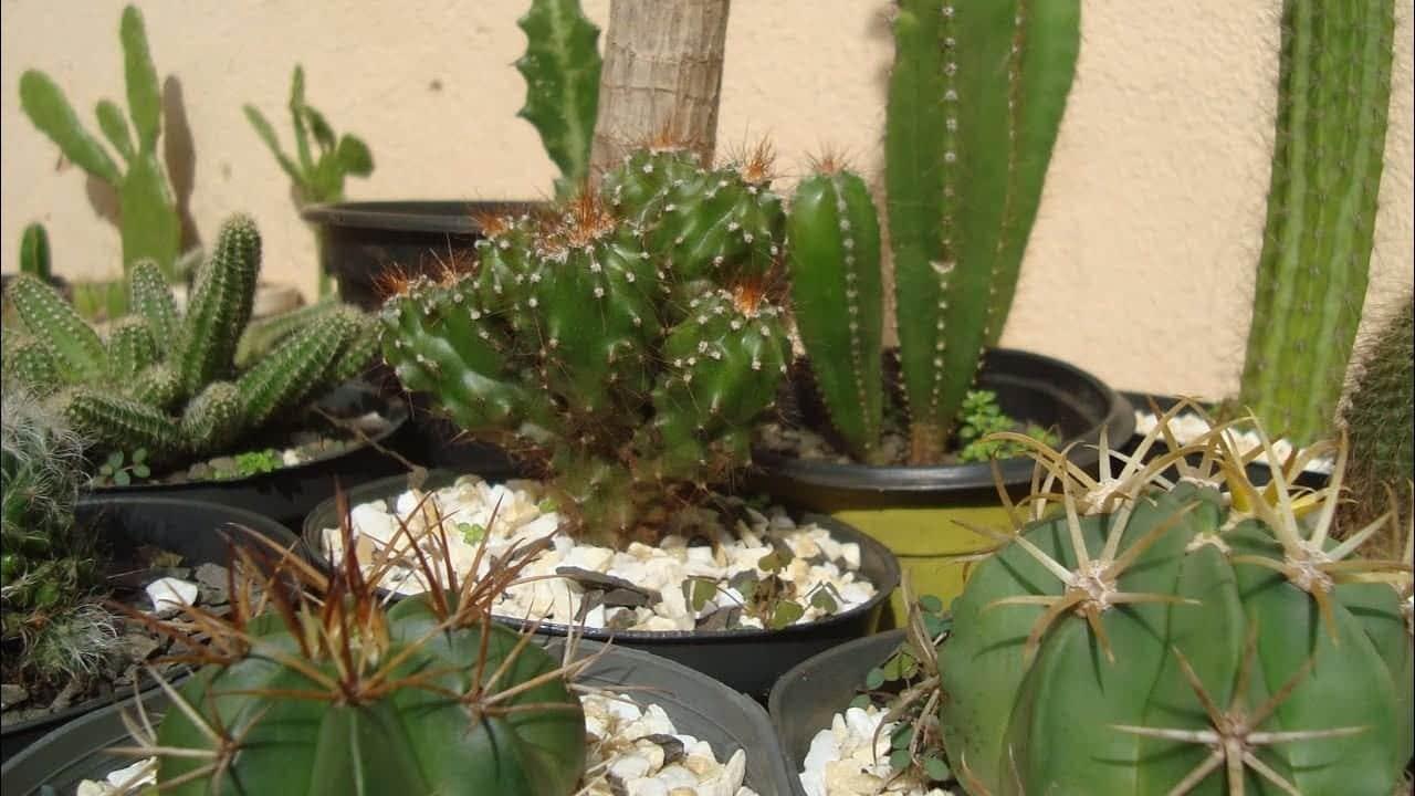 10 boas opções para quem quer ter plantas em casa