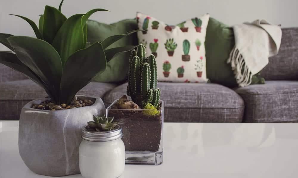 Plantas em casa, 10 opções perfeitas para cultivar e decorar