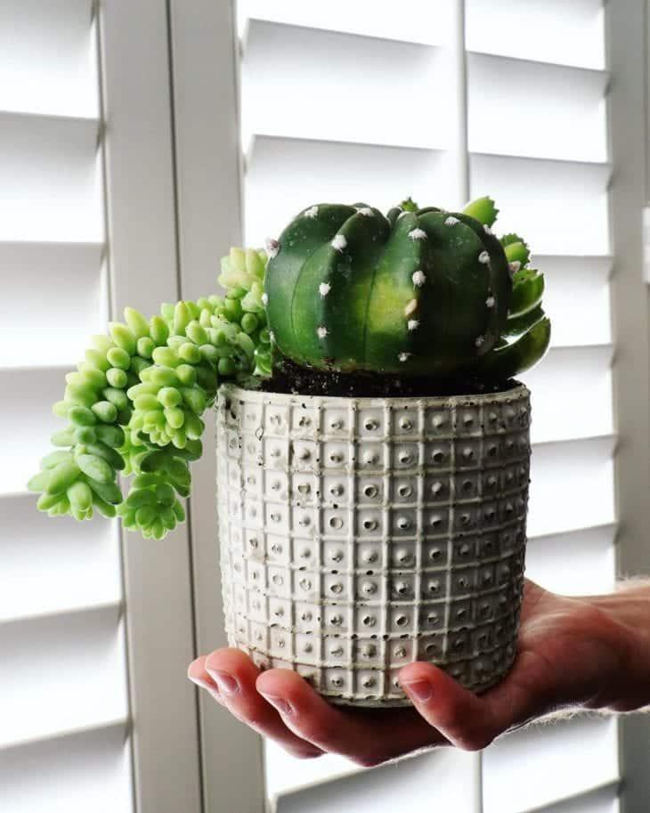Como fazer vaso de cimento, como usá-lo na decoração e inspirações
