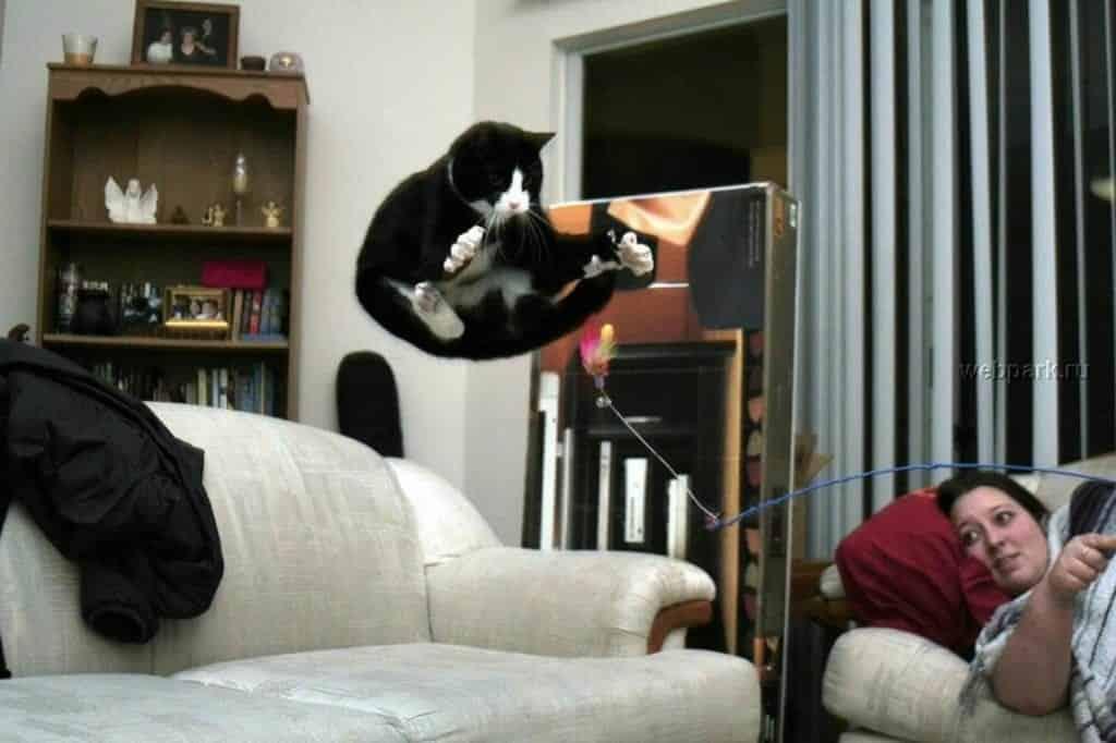 Confira agora as 30 melhores fotos de gatos da internet
