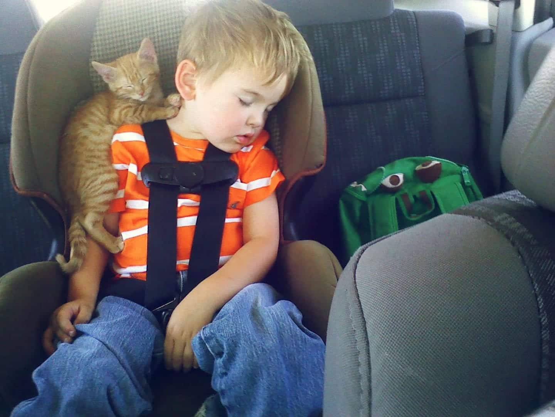 Fotos de gatos mais fofinhos e engraçados da internet