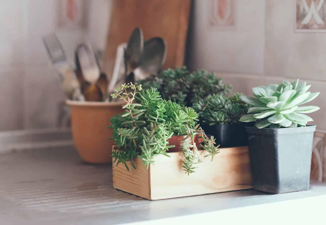 Comece agora o seu jardim de suculentas. Aprenda com a gente