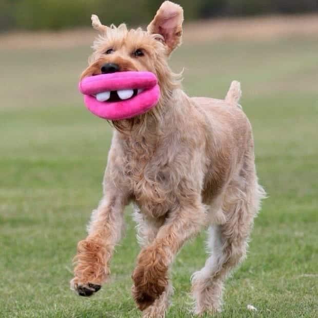 Confira agora mais de 100 fotos de cachorros da internet