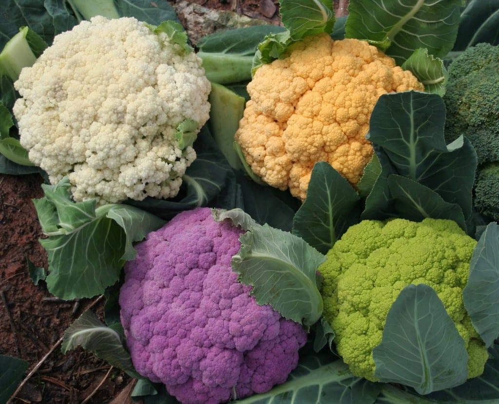 Descubra agora todos os benefícios da couve-flor e + 5 receitas especiais