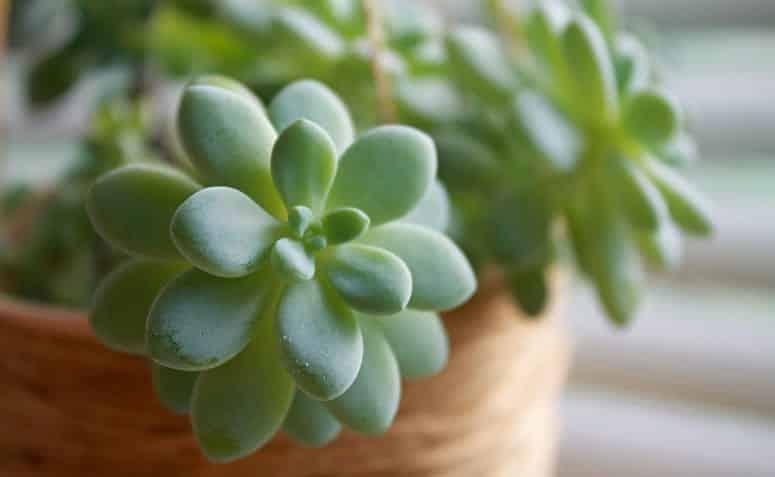 Suculentas - como plantar, tirar mudas e com fazer jardim de suculentas