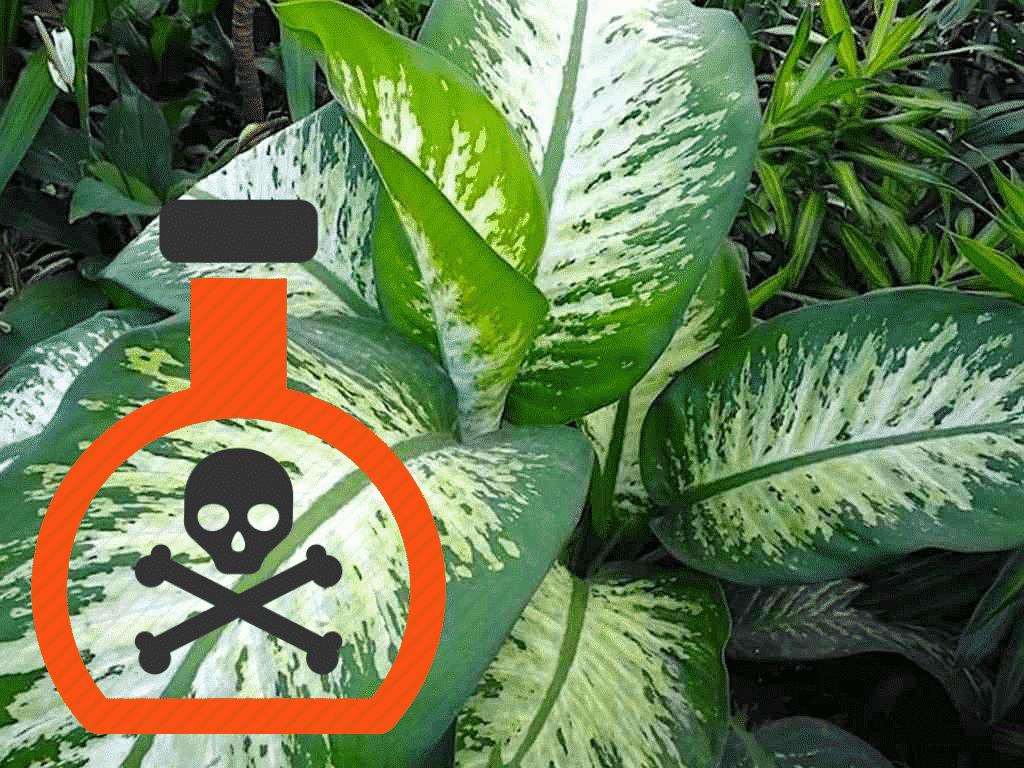 Comigo-ninguém-pode: A planta mística e perigosa ao mesmo tempo
