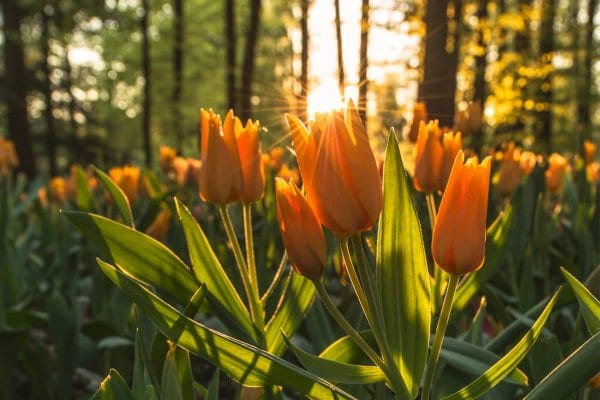 Equinócio de Primavera - época de alegria e renovação