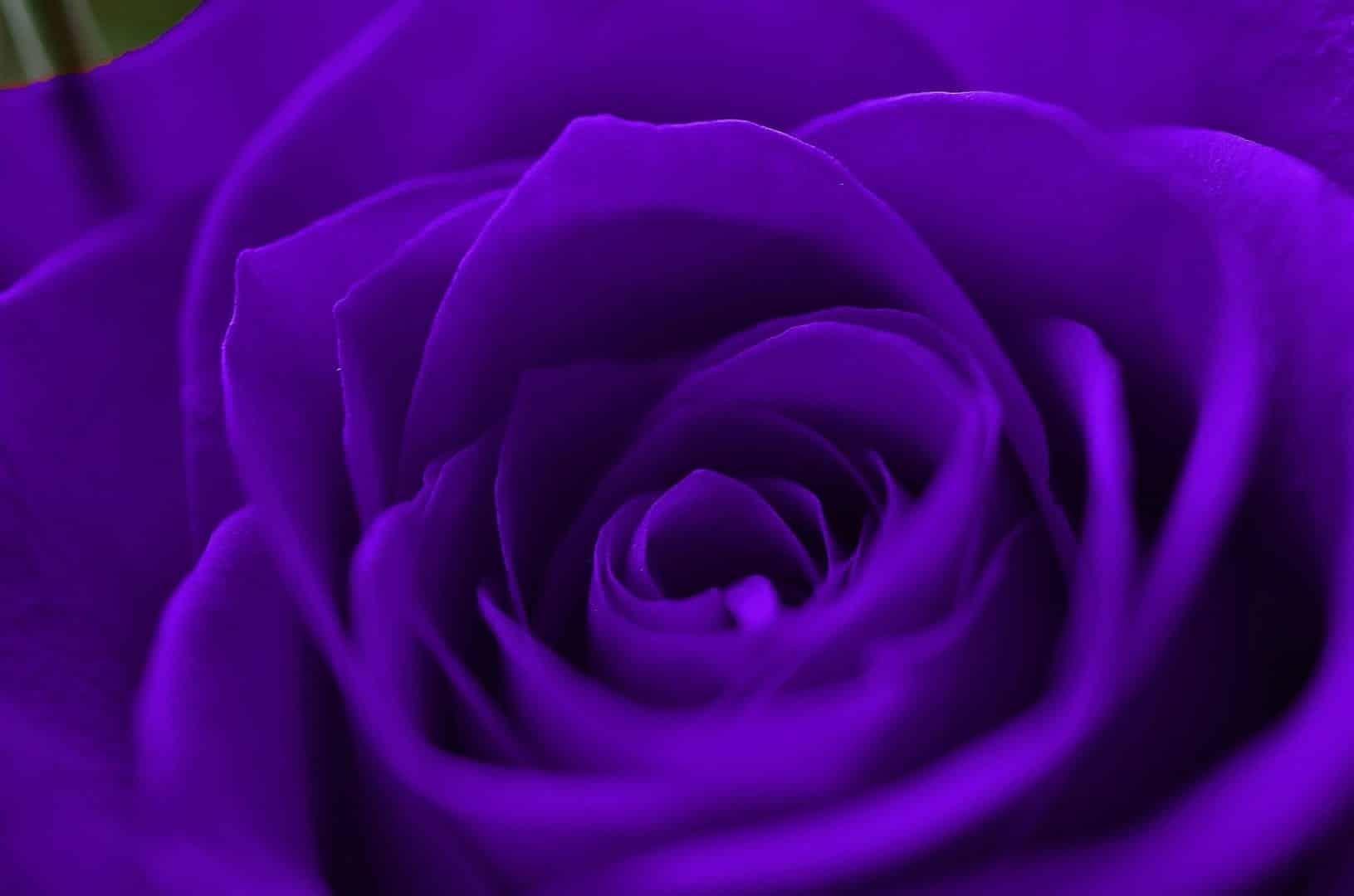 Roxo - Conheça 50 curiosidades sobre a cor que tem diversos significados