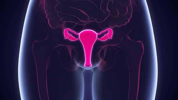 Estrogênio - O que é, para que serve e como influencia a saúde da mulher