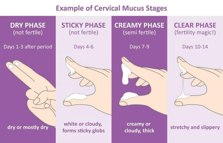 Muco cervical, o que é, para que serve e como avaliar?