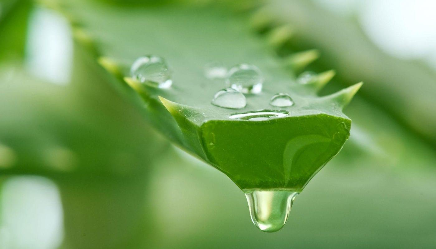 Como secar espinha- 8 tratamentos caseiros eficazes para acabar com ela