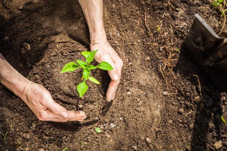 Acabar com formigas- O que fazer e como prevenir o surgimento delas