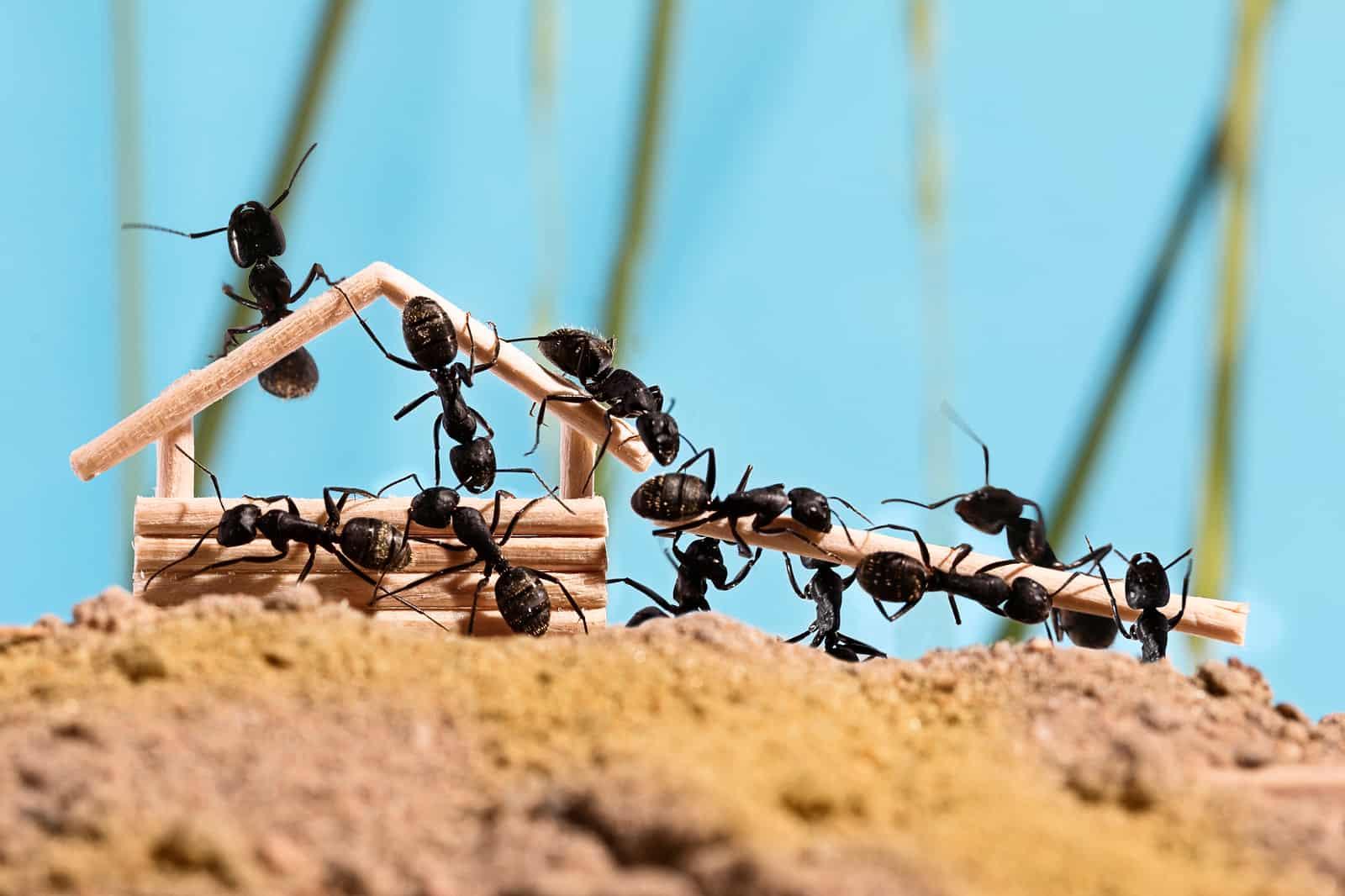 Acabar com formigas - O que fazer e como prevenir o surgimento