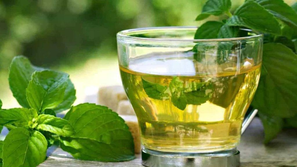 Chá de boldo – O que é, benefícios, propriedades e contraindicações