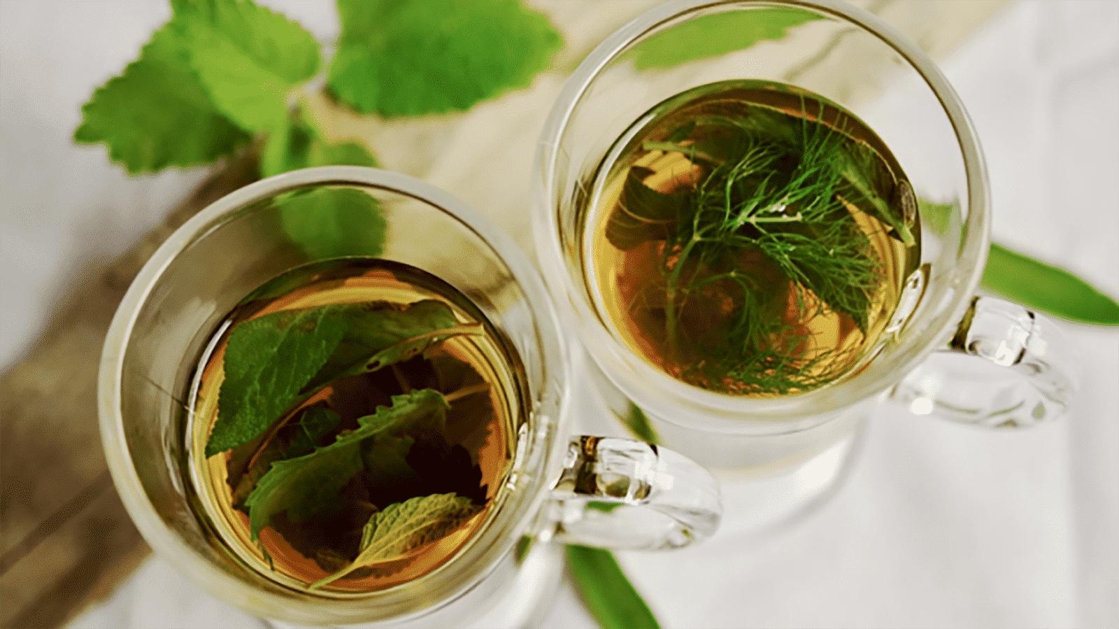 Chá de boldo- benefícios, propriedades, contraindicações e como fazer
