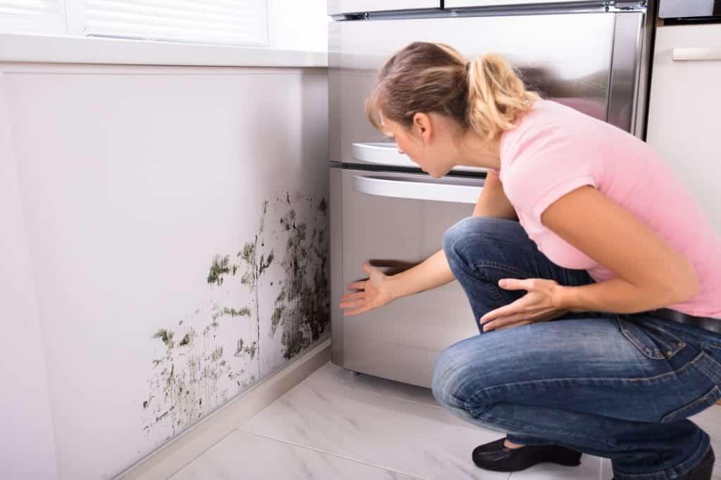 Cheiro de mofo – Origem, limpeza e receitas para eliminar o problema