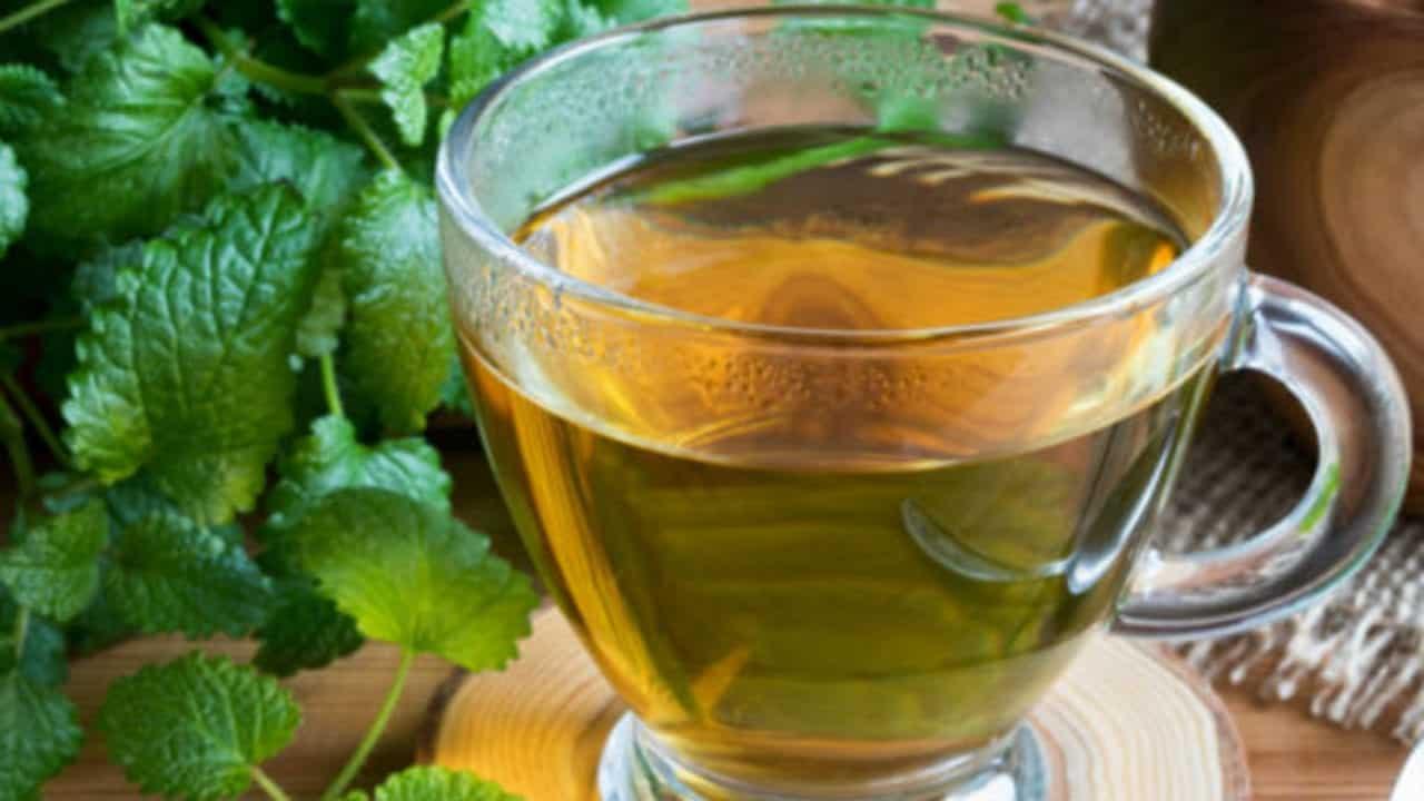 Erva-cidreira: para que serve, benefícios, contraindicações e como fazer