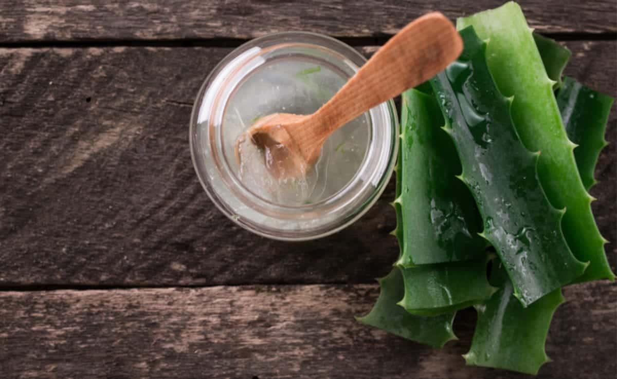 Aloe vera - Benefícios, utilizações e formas de usar