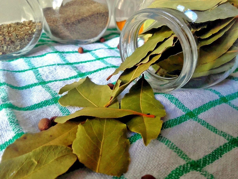 Folhas de louro – O que é, benefícios e contraindicações