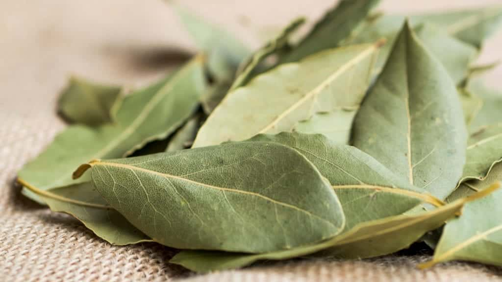 Folhas de louro, o que são? Benefícios e contraindicações