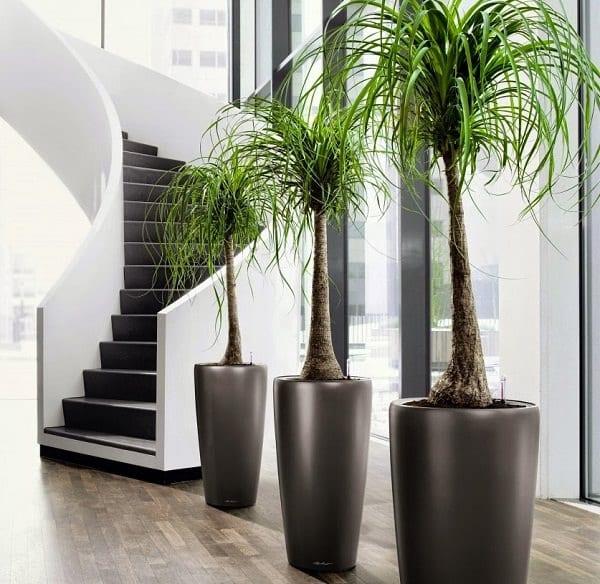 Regar plantas: você realmente sabe como fazer?