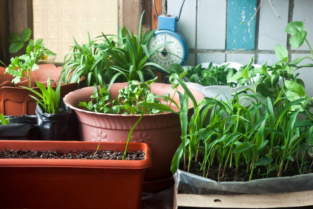 Horta em casa – Dicas de como plantar e cultivar hortaliças em casa
