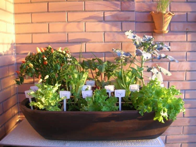 Horta em casa - Dicas de como plantar e cultivar hortaliças em casa