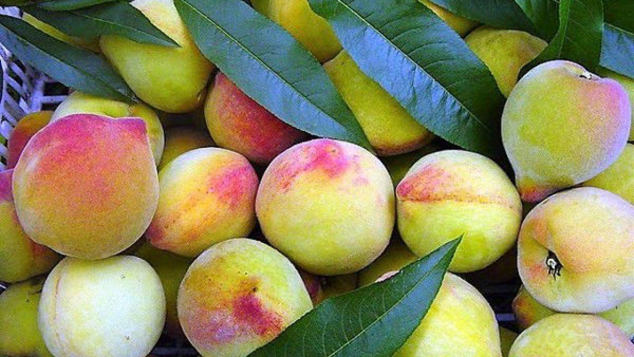 Pêssego - Conheça os benefícios da fruta chinesa para a saúde e pele
