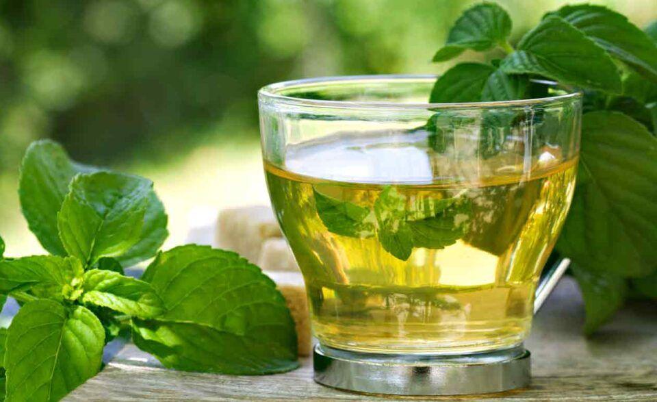 Chá de boldo, o que é? Benefícios, como fazer e contraindicações