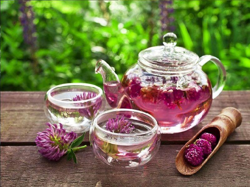 Chás para menopausa: Trevo Vermelho