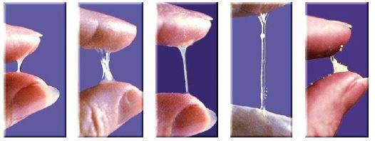 Evolução do muco cervical em periodo fertil