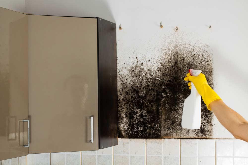 como tirar cheiro de mofo comodos objetos e paredes 1 - Cómo quitar el olor a moho de las habitaciones, los objetos y las paredes