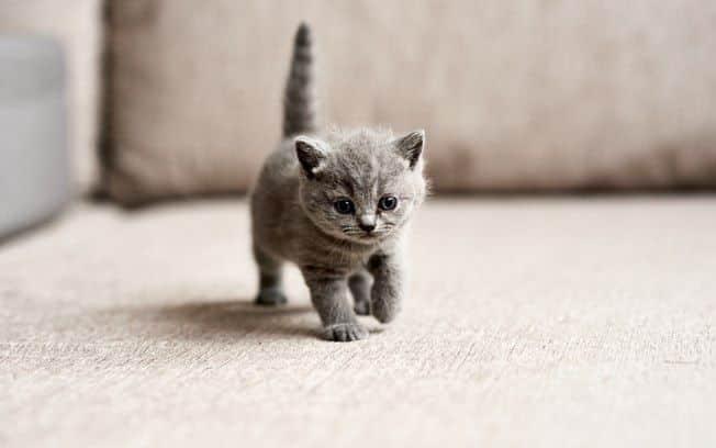 Sonhar com gato – Possíveis significados e interpretações