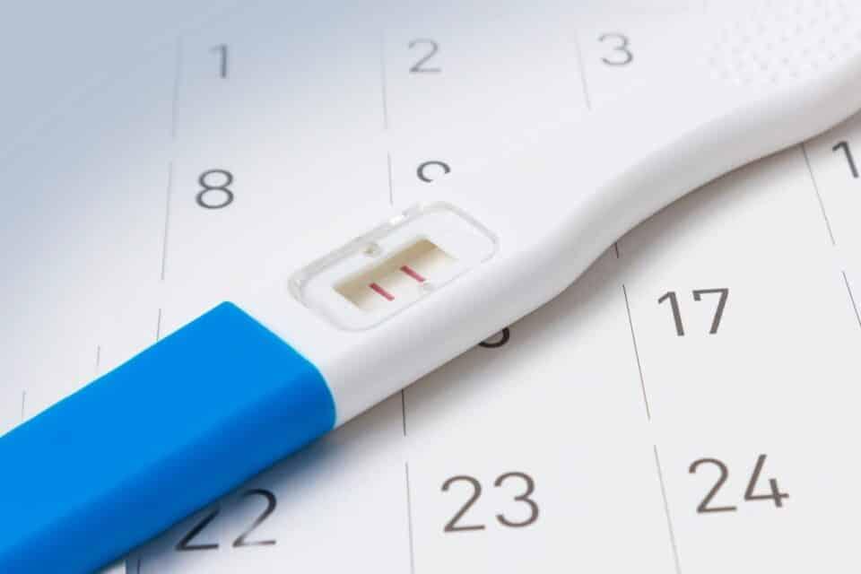 Quando é o período fértil? Aprenda como fazer o cálculo