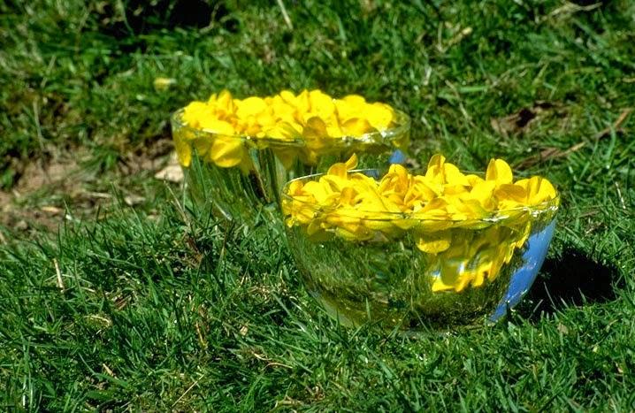 Florais de Bach: Para que servem, principais benefícios e como tomar